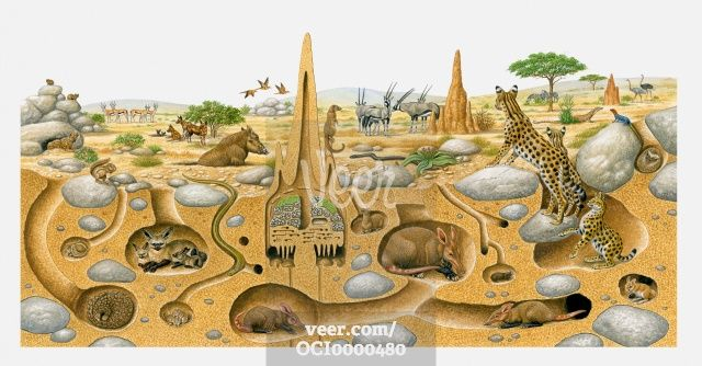 Cross Section Of Dessert Burrows Animals Living In