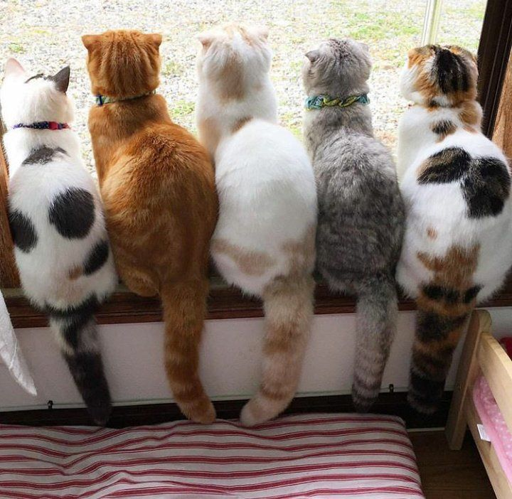 Lovely! So fat and fluffy fur balls and tails!