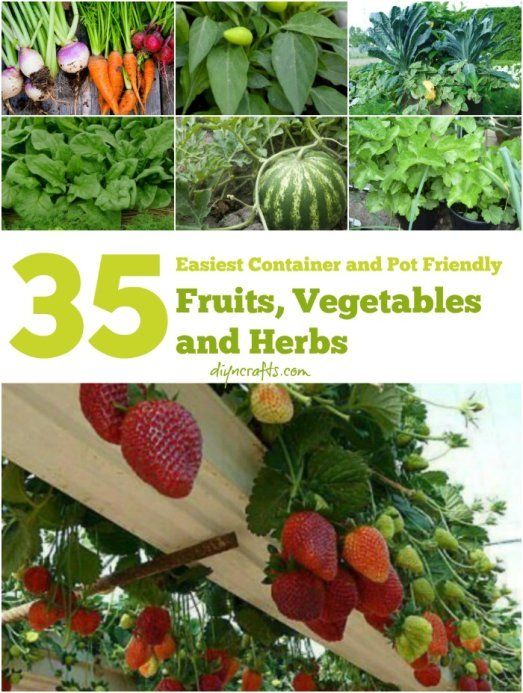 The 35 Easiest Container and Pot Friendly Fruits, Vegetables and Herbs. Must read!