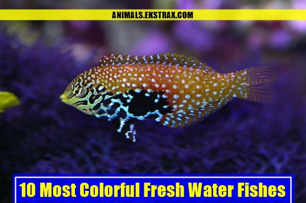 10 Most Colorful Fresh Water Fishes