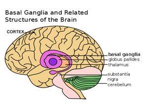 The Basal Ganglia and Dystonia