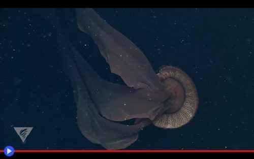 Il cupo spettro fluttuante delle profondità marine Chiunque abbia trascorso più di un paio di mesi su una piattaforma petrolifera con equipaggio ridotto in alto mare, ben conosce i primi sintomi della pazzia. Le giornate che paiono allungarsi all'inf #animali #meduse #oceano #mare #creature