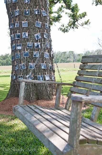 A pic tree