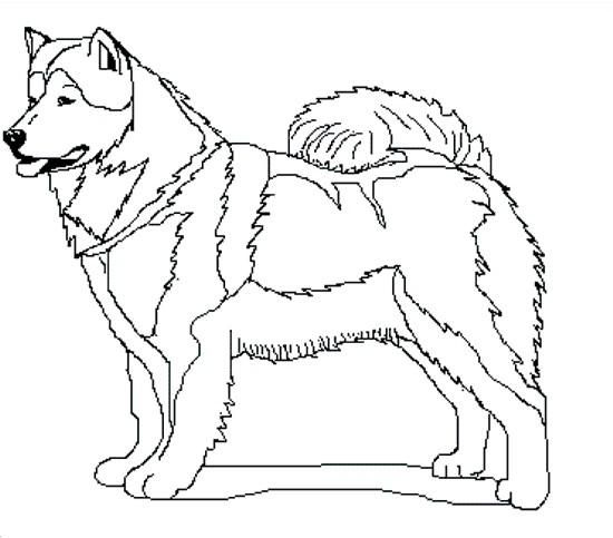 free sled dog coloring pages - photo#20