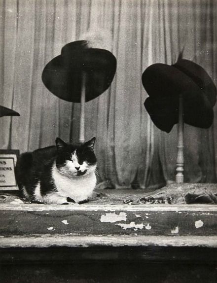 From City Cats. 1938 | Brassai