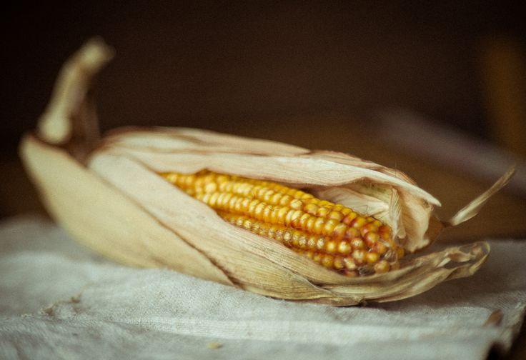 фотограф Марина Негодина, www.negodina.com.ua food photo кукурузный початок