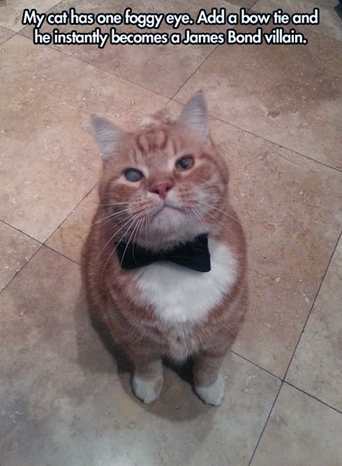Add a bow tie, and...