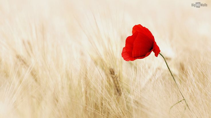 66940381 Adorable Red Flower Images HD, 1920x1080