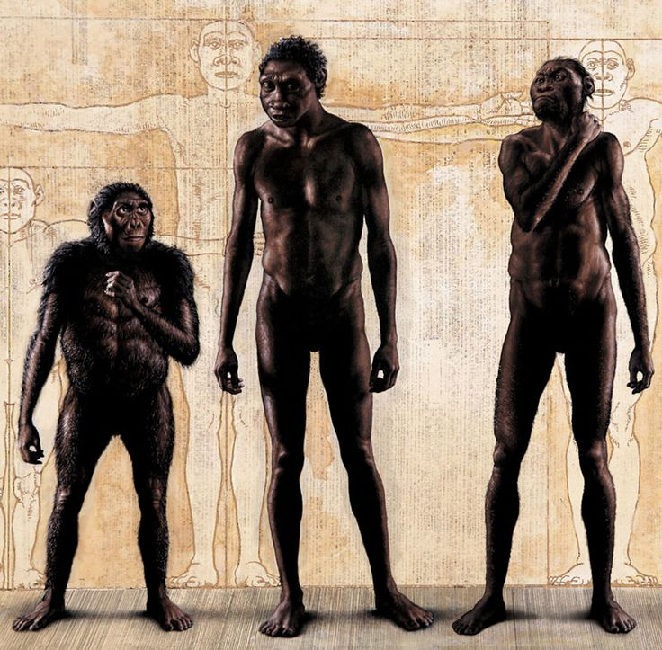 Homo naledi, discovered in a cave near Johannesburg, is a human ancestor unlike any species previously known. The find is arguably one of the most important discoveries in human origins research in half a century. It's also the most perplexing.