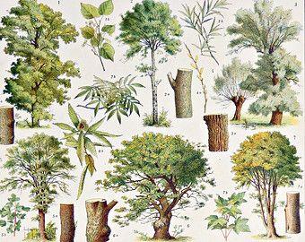 92 mejores im genes sobre rboles trees en pinterest for Arbol de fuego jardin