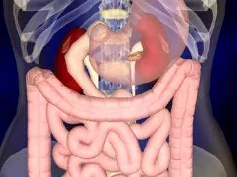 The Digestive System Animation (Ariella can't seem to get enough of this video.)
