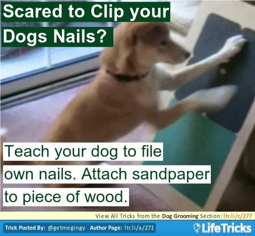 28 best pets and veterans images on pinterest military for Hardwood floors dog nails