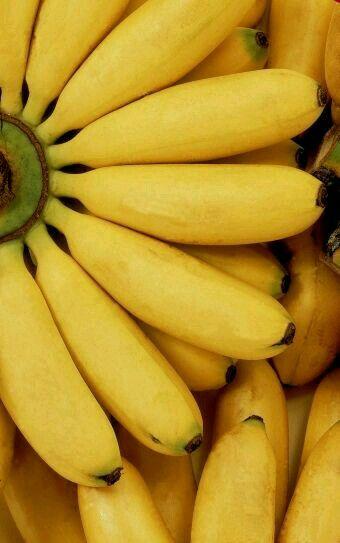 Las bananas (en algunos lugares se conocen como bananos) son muy saludables por las abundantes fibras que contiene, además es rica en potasio; es una de las frutas ideales para ayudar a perder peso, pero no debemos excedernos en su consumo ya que contiene azúcares. Esta es la única fruta que contiene vitamina B6, la cual fortalece el sistema inmunológico y además disminuye el riesgo de contraer enfermedades cardíacas.
