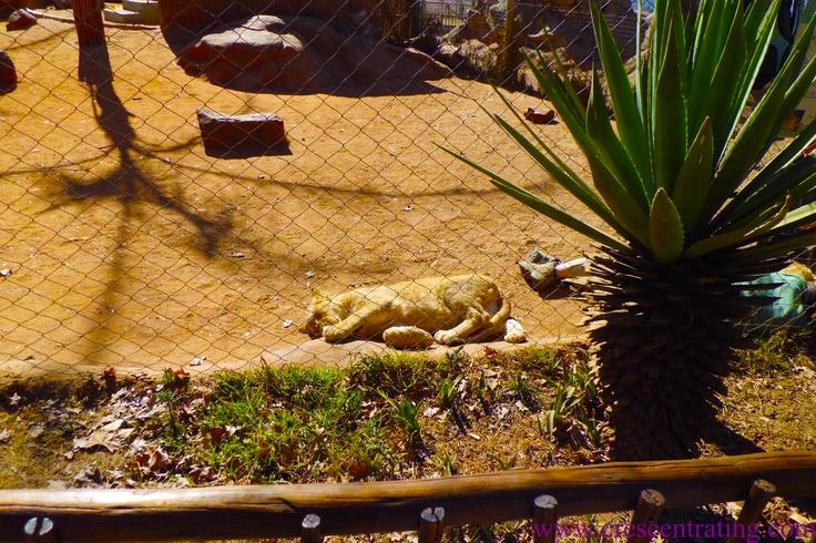 Lion Park in Gauteng, South Africa