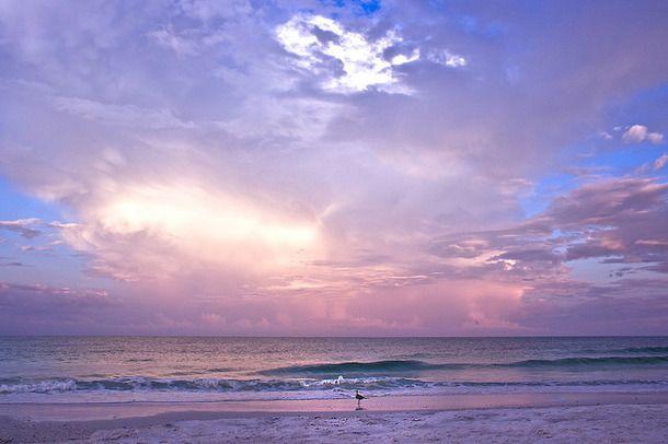 Favim.com-beach-bird-clouds-dawn-sky-187987.jpg (610×406)