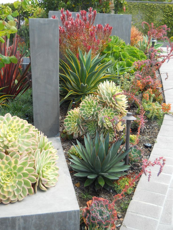 A successful Arid Tropical design relies heavily on the use of bold textures, strong contrasts and dense plantings, which is well executed here.                                                                                                                                                      More