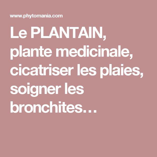 Le PLANTAIN, plante medicinale, cicatriser les plaies, soigner les bronchites…