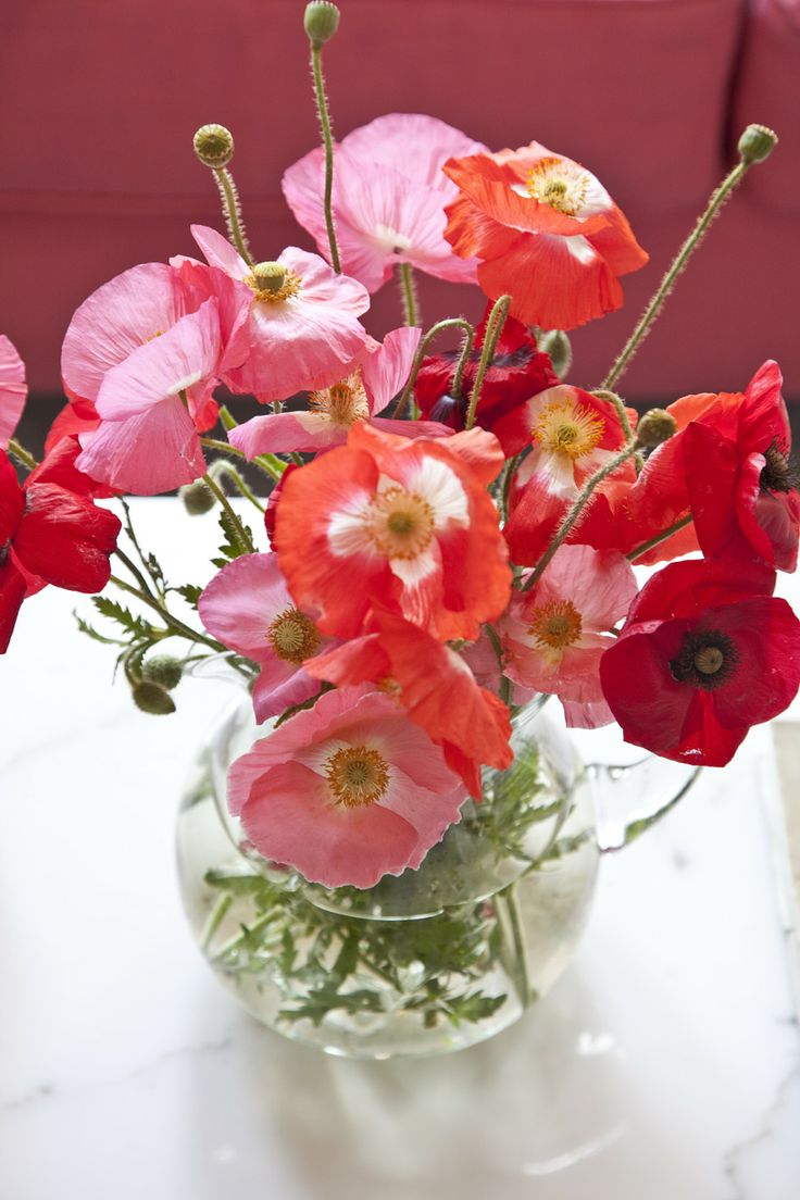 175 best poppies images on pinterest poppies beautiful flowers and pretty flowers. Black Bedroom Furniture Sets. Home Design Ideas