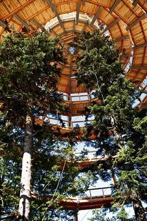 Baumwipfelpfad und Baumturm im Nationalpark Bayerischer Wald