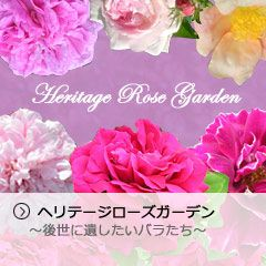 岐阜県可児市【世界に誇るバラ園】 花フェスタ記念公園 -