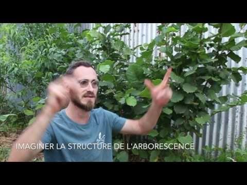 Comprendre la Taille et la fructification des fruitiers pour la permaculture - YouTube