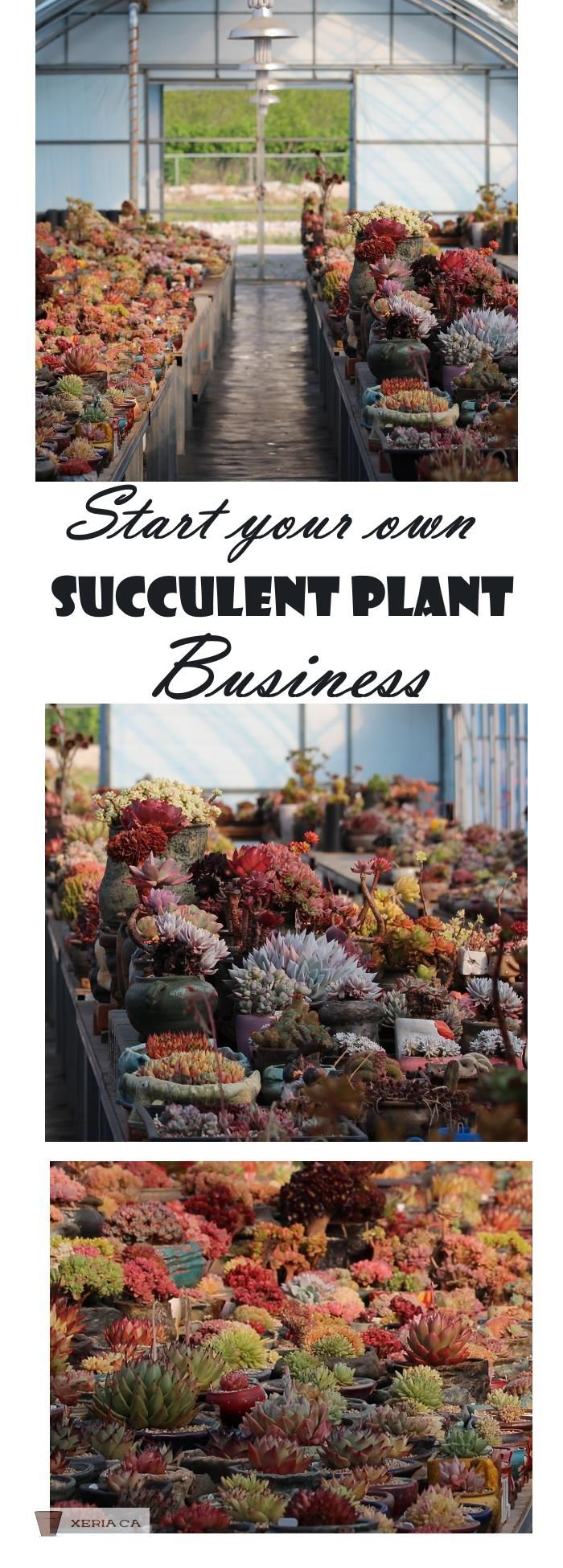 Follow your dream, live your bliss. Take the e-course and learn how to start and run your very own succulent plant nursery business...