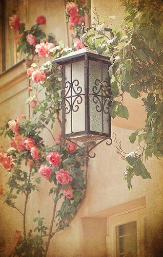 Rose garden (Chile) by Georgianna Lane