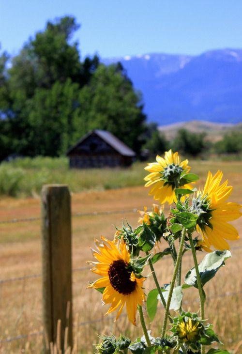 Saiba mais sobre a tranquilidade da vida no campo e todos os seus benefícios em…
