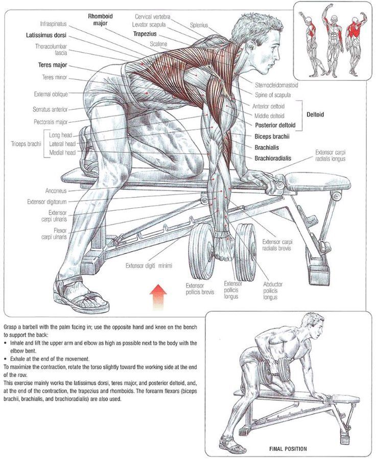 Exercise Instructions    1. Using a flat bench, grasp a dumbbell with your left hand.  2. Rest your right knee on the flat bench. Balance your body using your free arm.  3. Bend forward at the hips.  4. Your torso should be parallel to the floor keep and your lower back flat.    5. Pull the