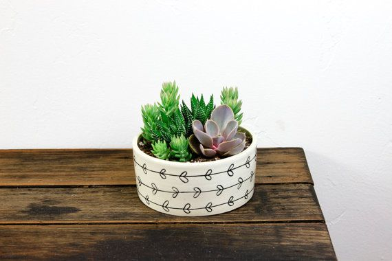 This versatile piece is great for a mod succulent office décor piece or a cute lush bookshelf option.    Echeveria Perle Von Nurnberg  Haworthia