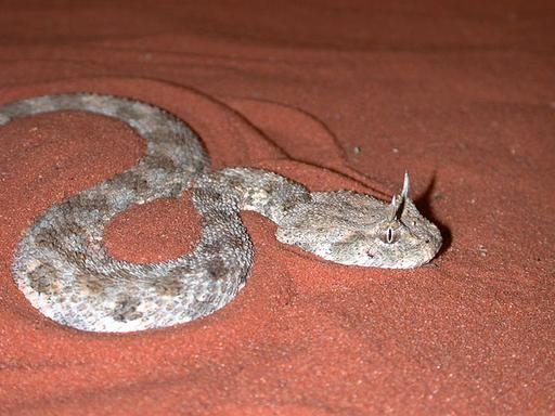 193 Best Venom Reptiles Worldwide Images On Pinterest