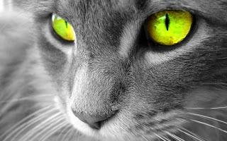 Schitterende kattenogen