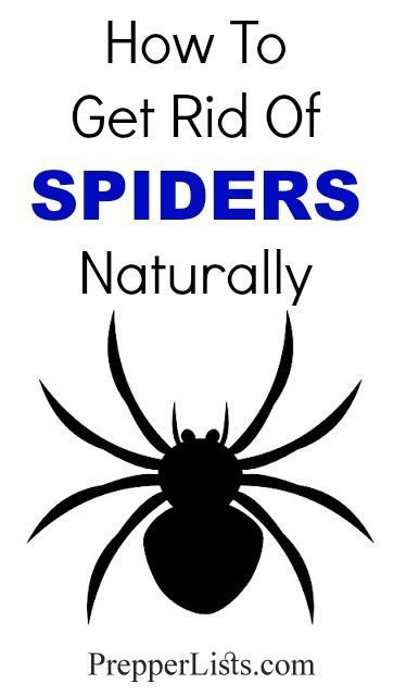 how to get rid of spiders in my home