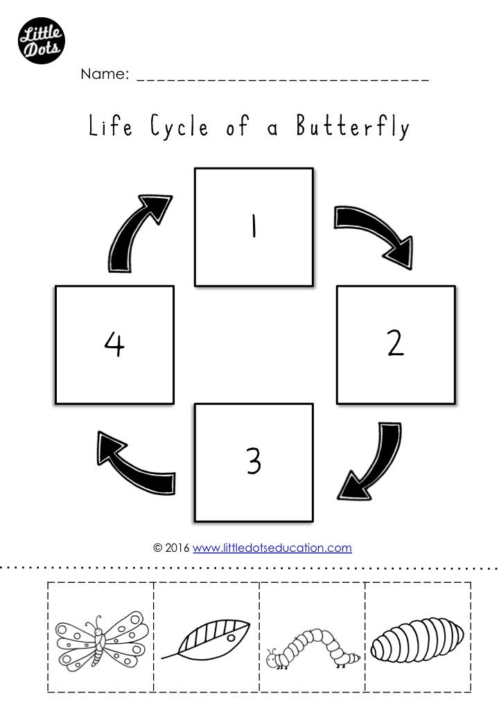 Butterfly life cycle worksheet for kindergarten