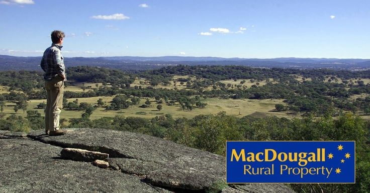 """Another day at the office. Here a client ponders the virtues of """"Blackbutt"""", a farm for sale near Uralla, NSW."""