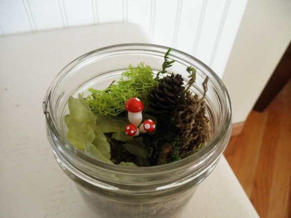 Everything you need to make a cute terrarium! This kit includes: 2.5oz of Black Sand 2.5oz of River Rock 1/2oz of Orchid Bark 1oz of Potting Soil 1/8oz of Activated Charcoal 10-12 square inches of dried moss. The moss that I send in the kits is dried, and will revive when it is