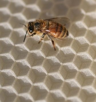 Cómo construir una trampa para un enjambre de abejas | eHow en Español