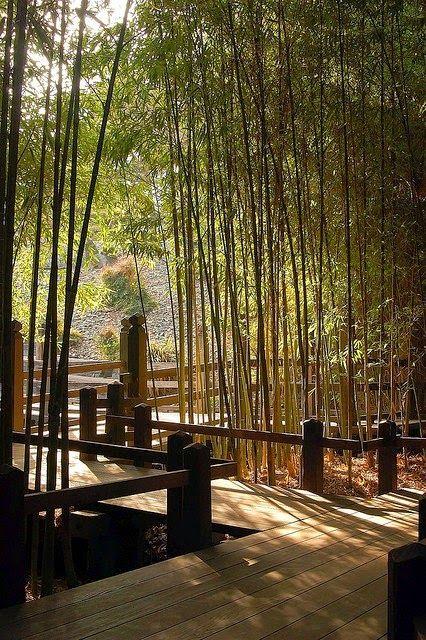 japana ĝardeno, Japanese Garden, japanischen Garten