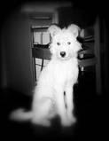 ourdog