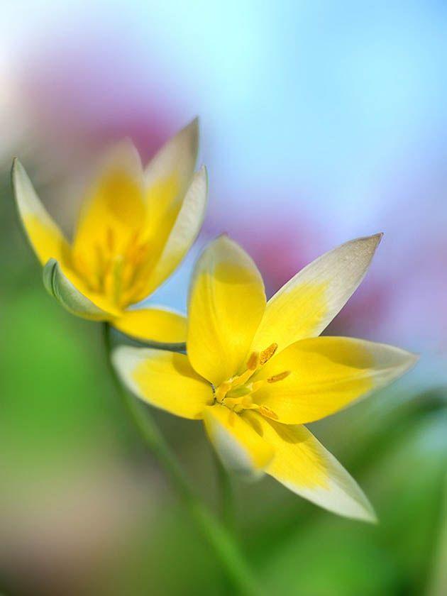 by Makushina Tatyana: Amazing Flowers, Flowers Photography, Amazing Photography, Tatiana Makushina, Florists Flowers, Flowers Power, Beautiful Flowers, Makushina Tatyana, Beautiful Photography