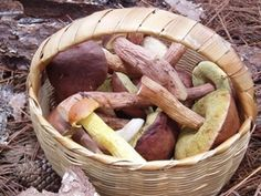 Edible Wild Mushrooms of the Pacific Northwest.