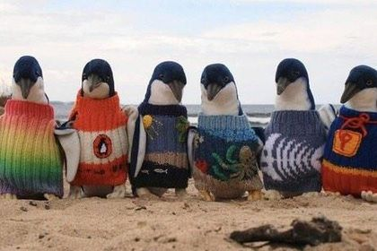 Lenta.ru: Из жизни: Люди: Самый старый австралиец год вязал свитера для пингвинов