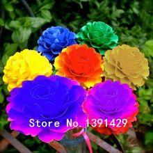 Nieuwe collectie 100 stks zeldzame real Regenboog Chrysant Bloemzaden, gemengde kleur, DIY tuin, Bonsai potplanten,(China (Mainland))