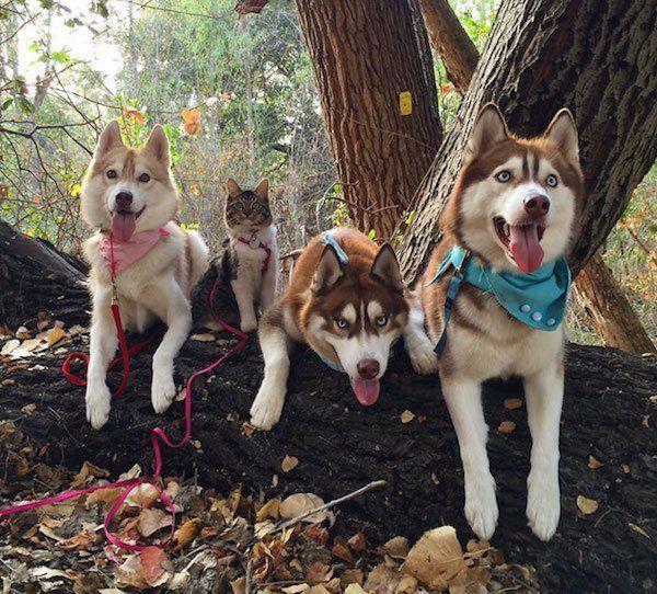 Puppies Make Me Happy 65 Cute Photo Com Imagens Gatos Caes Cao E Gato