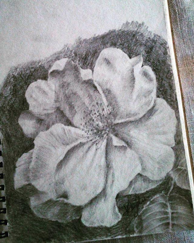 #sketchbook #sketch #drawing #rose #graphic #pencil #wildrose