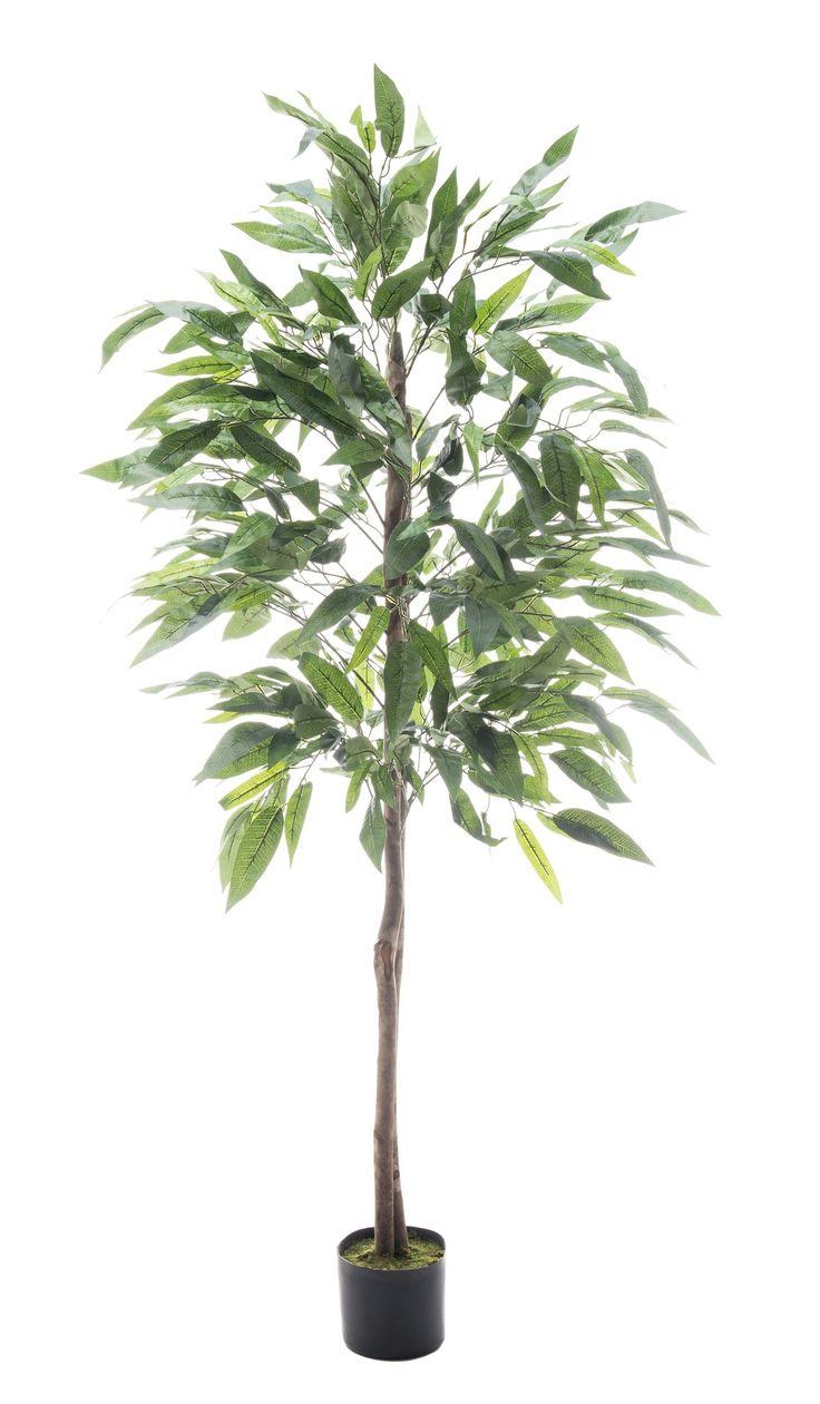 Tekokasvi, mangopuu 180cm