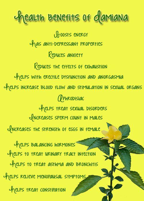 Health benefits of Damiana