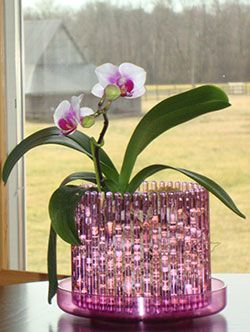 Orchid in Orchitop Carousel Pot [the coolest orchid pot ever!]