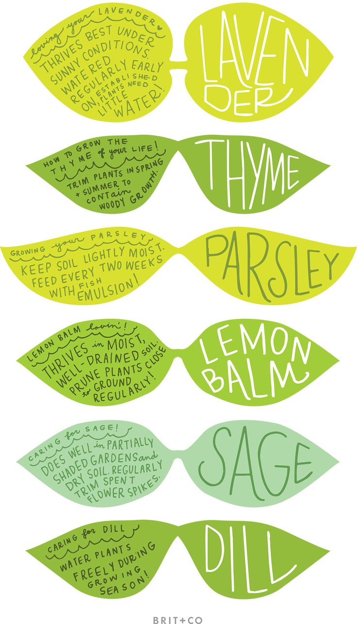 Mark your spring herbs in your indoor or outdoor garden with these printable labels.