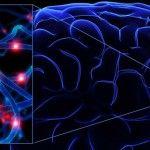Travmatik Beyin Hasarı Hakkında Bilinmeyenlerin Değerlendirilmesi
